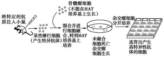 高中-生物|动物细胞体外培养的原理和过程-题库-e学