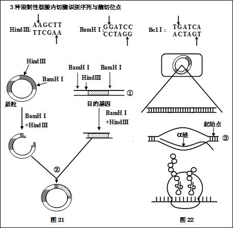 标准的pcr过程一般分为变性