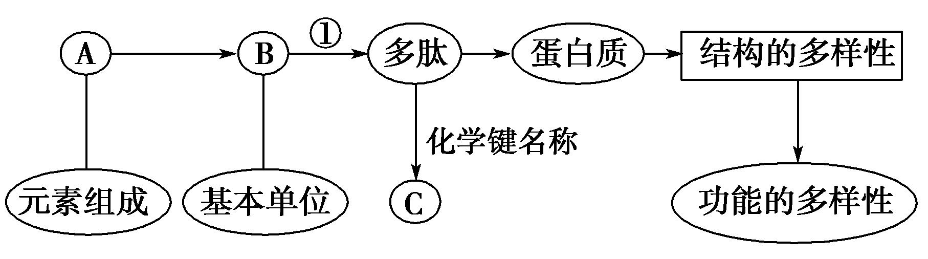 下图表示有关蛋白质分子的简要概念图