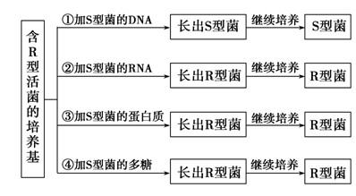 """如图所示为""""肺炎双球菌的转化实验""""的部分研究过程"""
