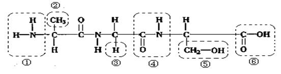 26、【单选题】 如图所示,甲、乙、丙为组成生物体的相关化合物,乙为一个由、、三条多肽链形成的蛋白质分子,共含271个氨基酸,图中每条虚线表示由两个巯基(SH)脱氢形成的二硫键(SS)。下列相关叙述不正确的是( )