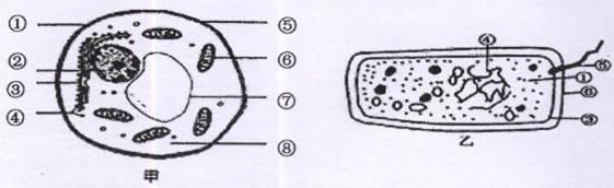 下面是两类细胞的亚显微结构模式图