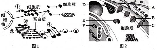 图为部分细胞结构及某些蛋白质的分布情况,据图请回答下列有关问题