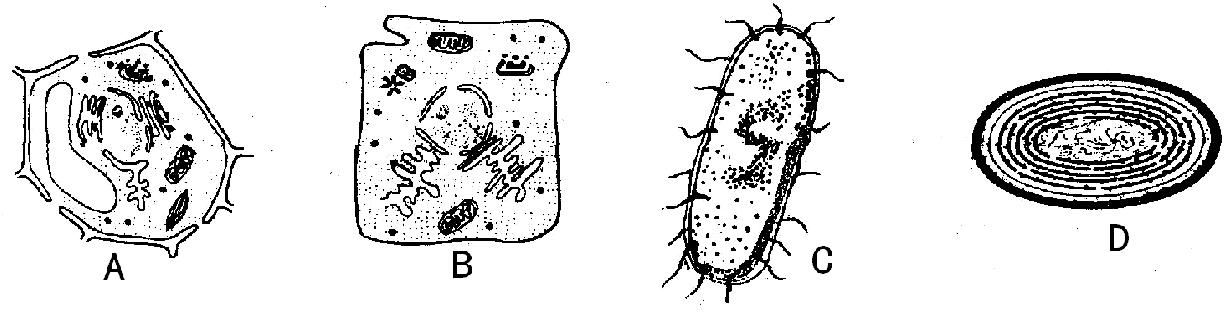 高中-生物|举例说出细胞的形态和结构的多样性-题库